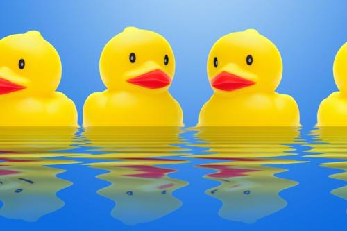 rubber ducks in a row on blue water with reflections